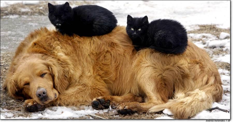 Doğa nın tüm canlılarına sevgi ve saygı ile bekir coşkun