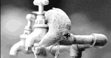 Su içen kuş